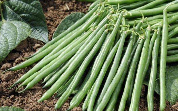 Українським аграріям підказали, як заробити по-крупному