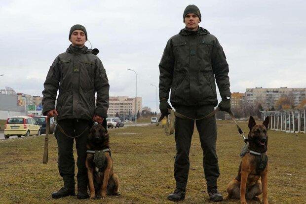 Службові собаки, фото: МВС