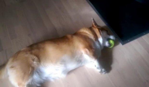Найледачіший пес-незграба підірвав інтернет (відео)