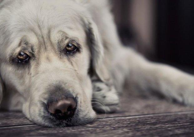 В Киеве построят кладбище для домашних животных: все официально
