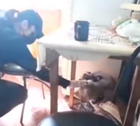побитый щенок, скриншот из видео