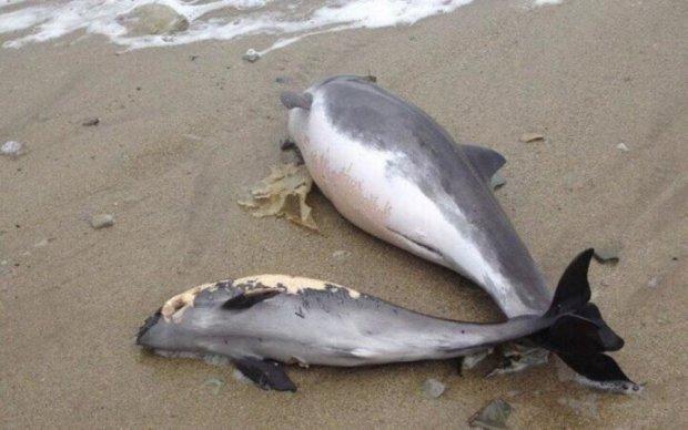 Зоологи бьют тревогу: оккупанты уничтожают дельфинов