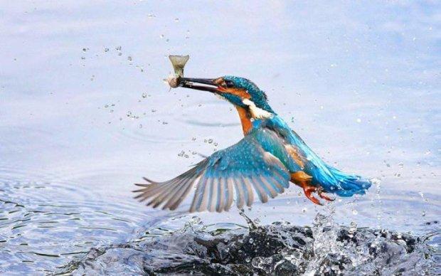 Ученые позаимствовали у птиц умение выходить сухим из воды