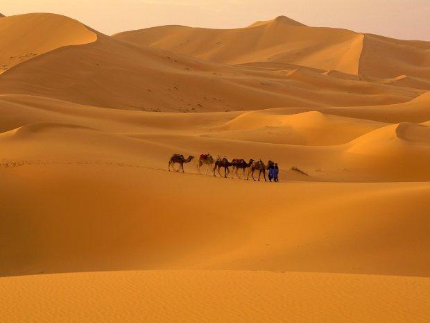 Величайшая пустыня мира: как выглядела Сахара 5 тысяч лет назад