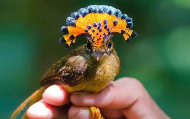 Птички-красотки научили женщин быть неотразимыми: фото