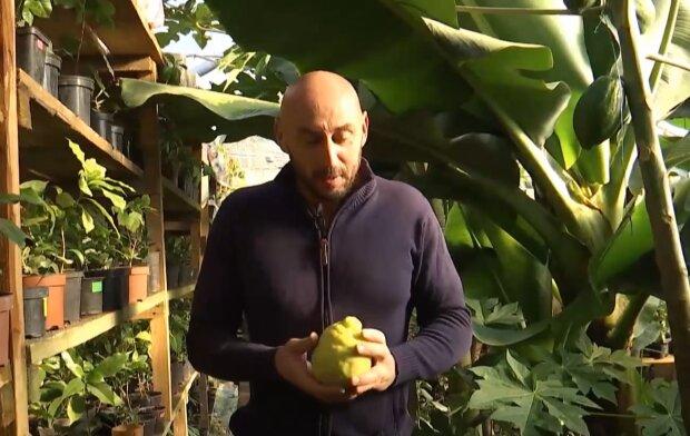 Родина львів'ян показала лимони та лайми розміром з кавун: як виростити у звичайній теплиці