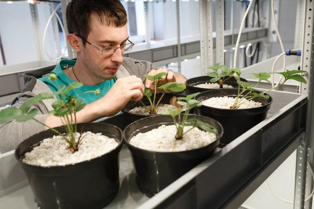 Физики создали экобоксы для круглогодичного урожая: грабли и лопаты в прошлом, придется только наблюдать