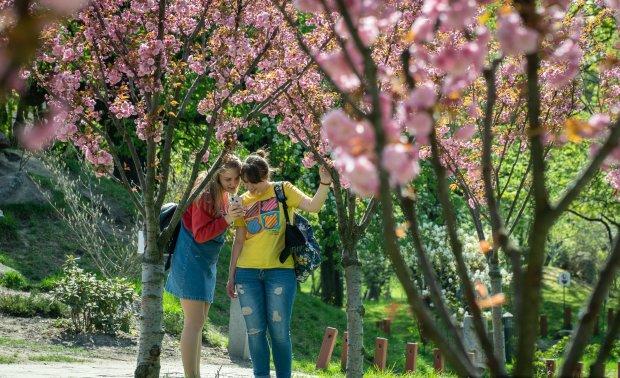 У Києві з'явилася маленька Японія: встигніть побачити і сфотографувати квіткове диво