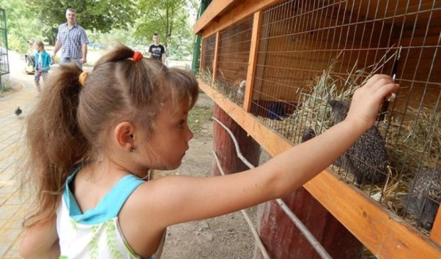 Їжаченят-сиріт врятували в луцькому зоопарку (фото)