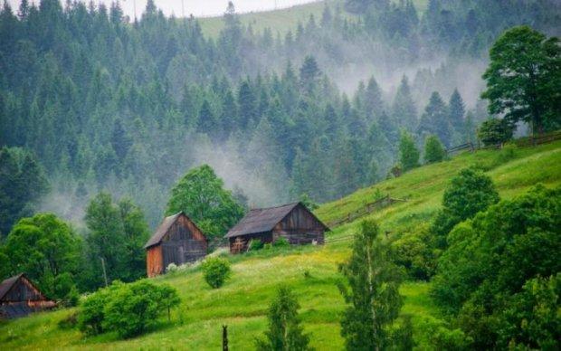 Украинские леса прировняли к главным сокровищам человечества