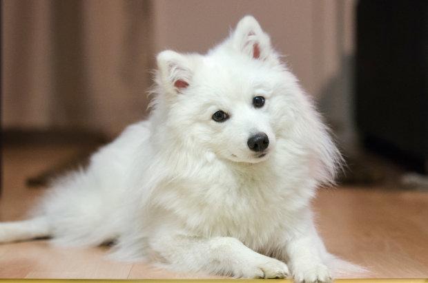 Девушка купила милого щенка, но из него выросло нечто ужасное: оказалось, что это не собака