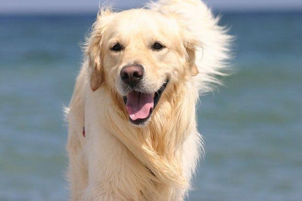 Смелый пес взошел на подиум и моментально стал звездой модного показа: неважно, что у тебя четыре лапы, главное – верить в себя