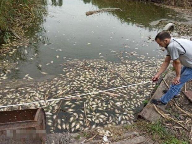 Под Днепром на берегу нашли сотни мертвых тел рыбы, которой никогда не стать таранкой