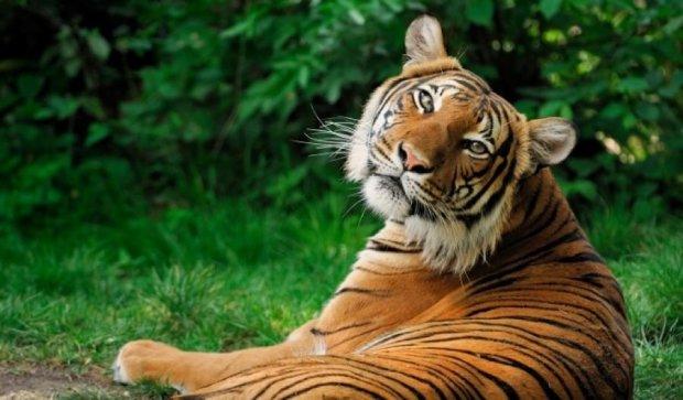 Тигр розірвав співробітницю зоопарку