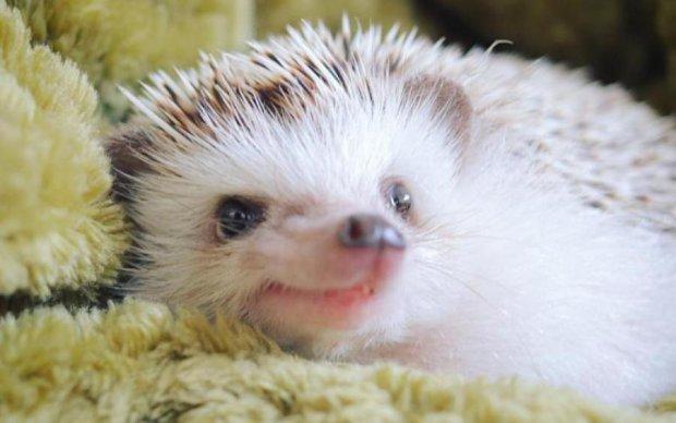 Ви колись бачили найщасливішого у світі їжака? А ось він