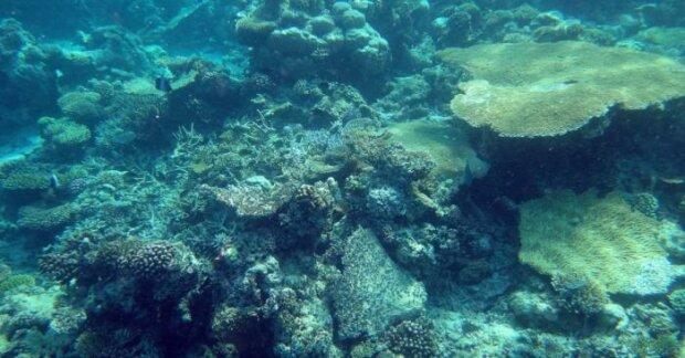 Крупнее белой акулы: ученые наткнулись на двухметрового скорпиона в океане