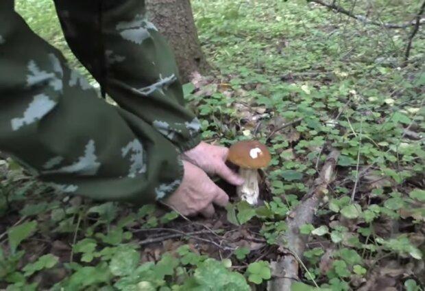Збір грибів, скріншот відео