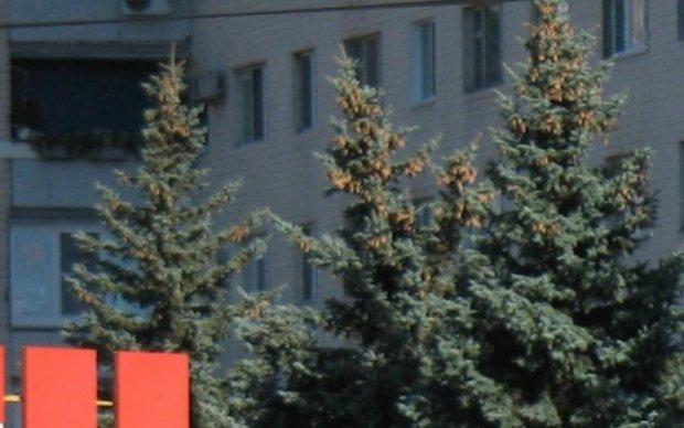 """""""Понавозвращались, мародеры"""": очередной криворожский маршрутчик возмутил сеть"""
