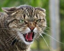 Бешеная кошка, фото: Вечерний Киев