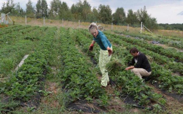 Земельная реформа: как теперь украинцам получить участок