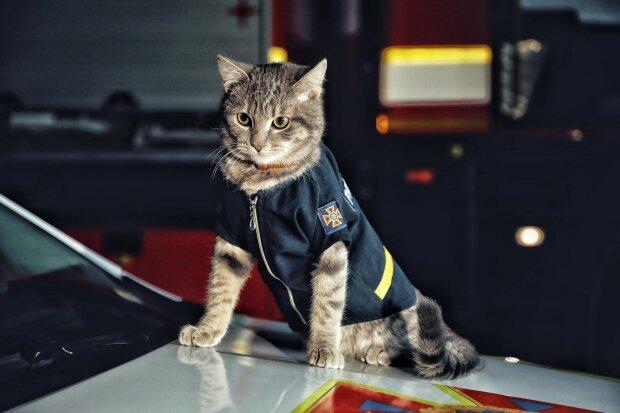 История кота-майора Чиваса, скриншот: Facebook