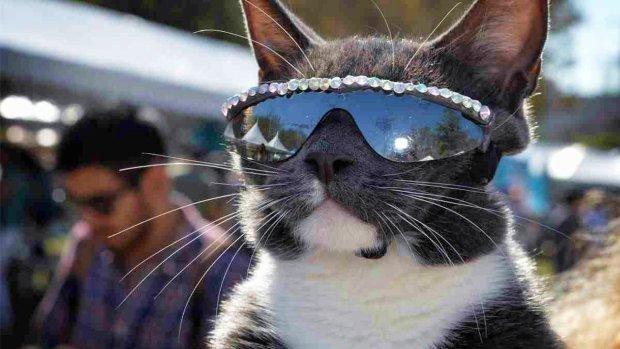 Бублик в очках: кошка без век покорила Instagram своим стилем