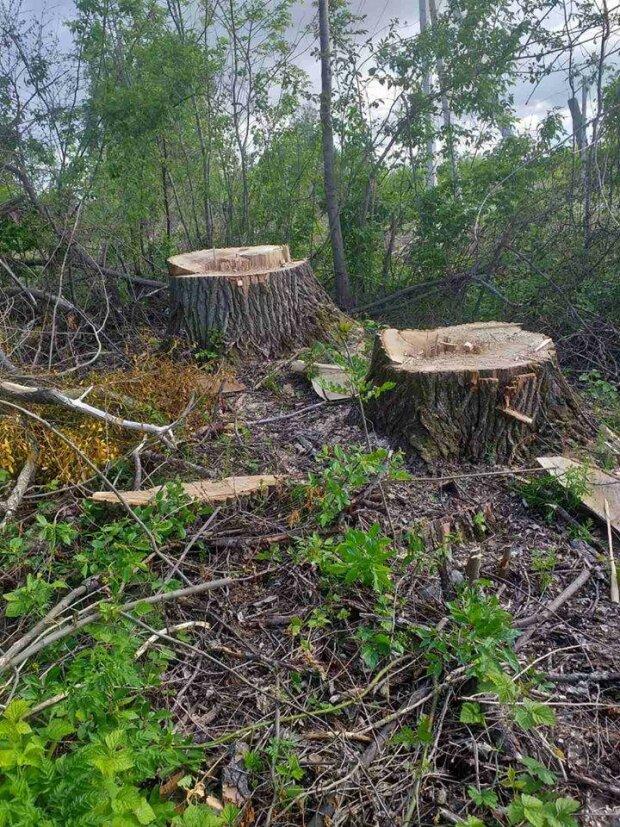 Черные лесорубы, вырубка лесов \\ фото ГЭИ Украины в Фейсбук