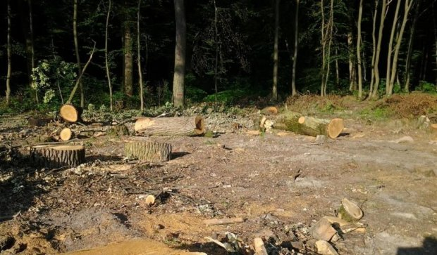 В Україні  правила вирубки лісів зробили більш жорсткими