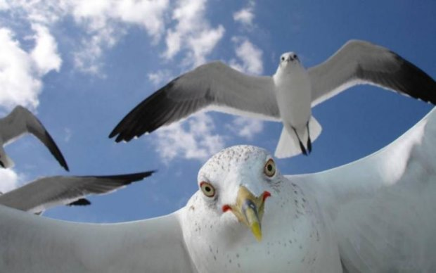 Чайка показала, чому людям рано тягатися з природою
