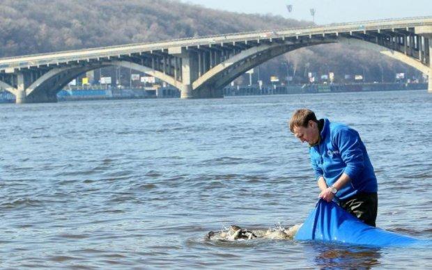 Екологи б'ють на сполох: в Україні рибу можна буде побачити лише в зоопарках