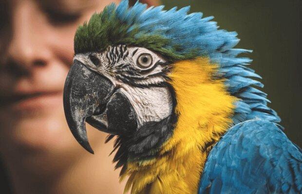 Такие умные и разговорчивые попугаи - фото pixabay
