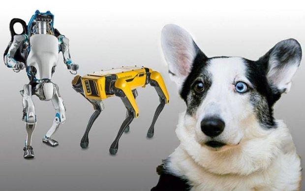 Незабаром у продаж надійдуть бездушні собаки