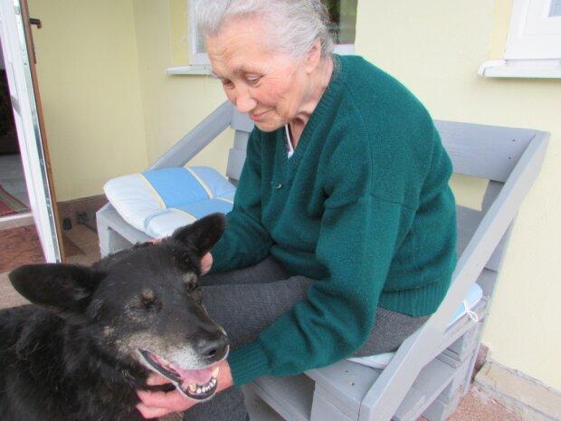 """""""Мухтар біг за машиною і скиглив"""": на Тернопільщині собака знайшов господиню в будинок для людей похилого віку"""