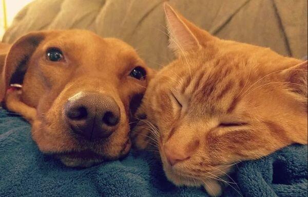 Таємне життя домашніх тварин: що робили собака і кішка без господарів, милі фото