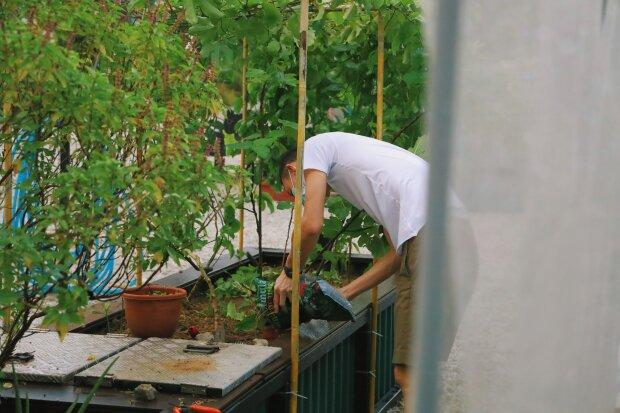 Садівник / фото: Unsplash