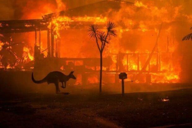 Лісові пожежі в Австралії: що є реальністю, а що - вигадкою