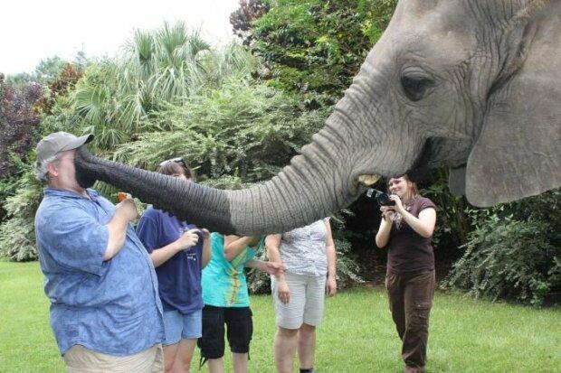 Поддался искушению: в Таиланде слон едва не убил несколько людей, фото