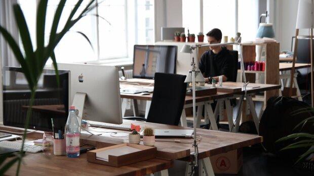 """Растения на рабочем месте действуют как """"валерьянка"""" на офисных сотрудников"""