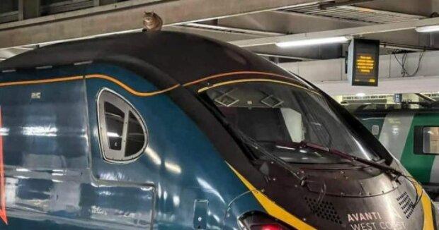 Врятували одне з 9 життів: зухвала кішка затримала швидкісний поїзд