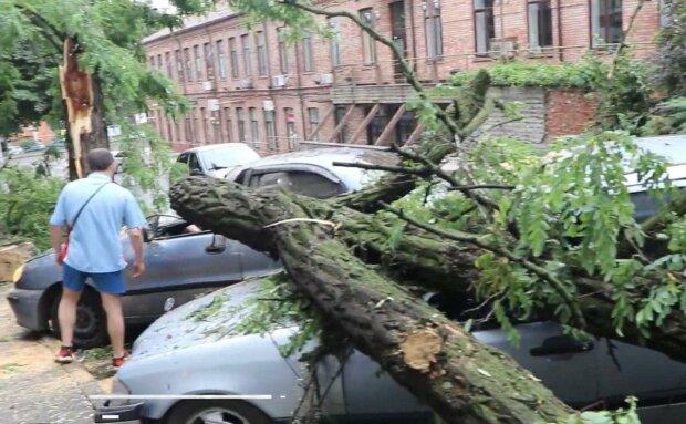 """В Днепре ураган """"припарковал"""" дерево на машины, были колеса - нет колес"""