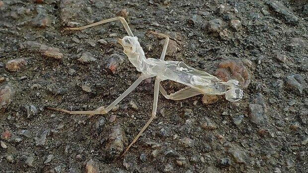 """Запорізький фотограф зловив в об'єктив """"комаху-привида"""" - шість лап, а всередині - нікого"""