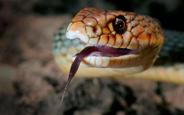 Гигантская змея заставила отдыхающих украинского курорта наложить в штаны: видео
