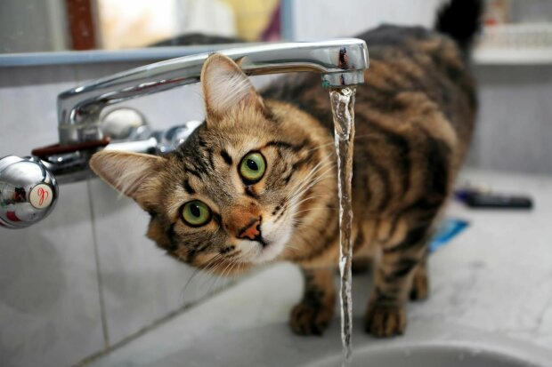 Вода в крані, Podrobnosti