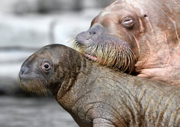 """У Херсоні помітили солодку парочку напівоголених """"моржів"""": заплатили комуналку за новими тарифами"""