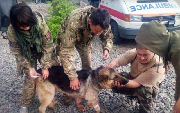 Героическая история: пес в АТО пожертвовал собой ради воинов