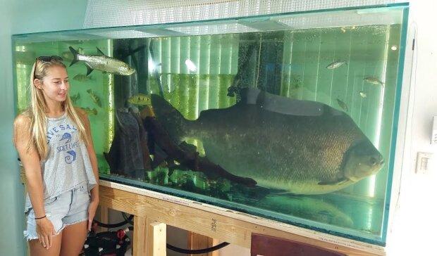 От зеркала до аквариума, топ-5 вещей, которые привлекут деньги в ваш дом