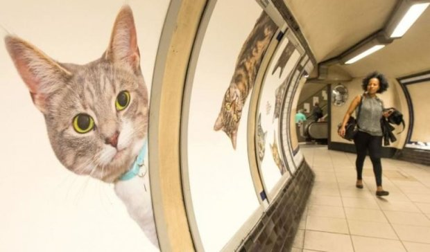 Коты захватили лондонское метро