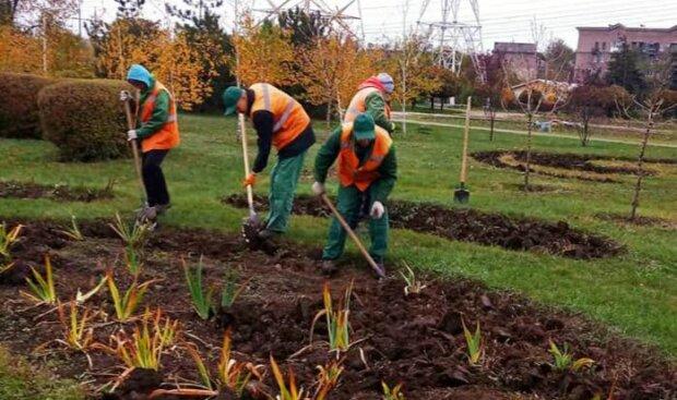 В Запорожье появятся новые цветы, фото: КП Зеленстрой