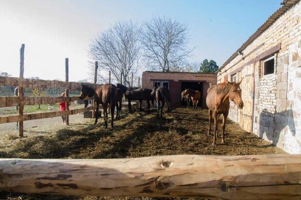 """Умирали в муках: под Киевом нелюдь устроил настоящий """"Бухенвальд"""" для животных, - жуткие кадры"""