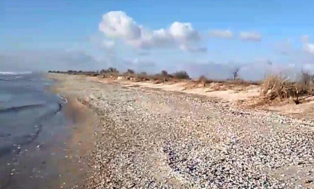 Кинбурнская коса, скрин из видео